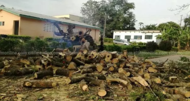 PHOTOS: Fallen Tree Kills GHANASS Student and Injures 7 others